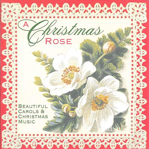 CHRISTMAS ROSE (A)